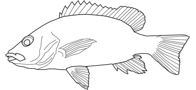 September 2013 Roosevelt Drawing 1