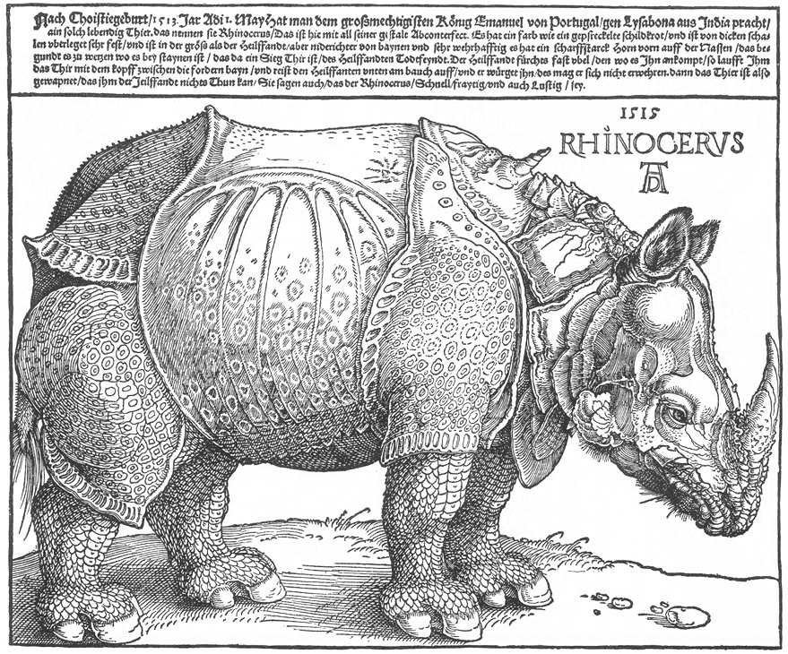 Dürer_rhino_full