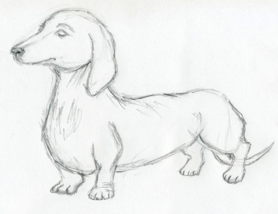 dog-sketches06