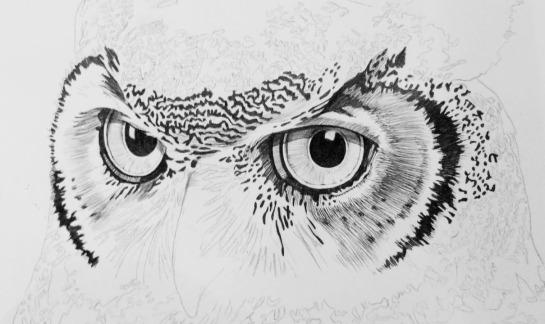 003_OWL copy