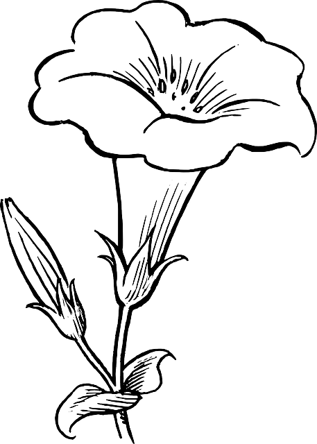lily-drawing-outlineblack-outline-drawing-flower---free-image---37974-g1aifisq