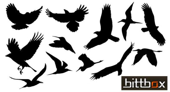 free_vector_birds