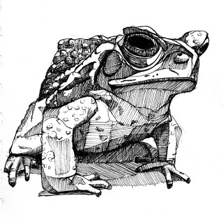 web_toad_2_3quarter