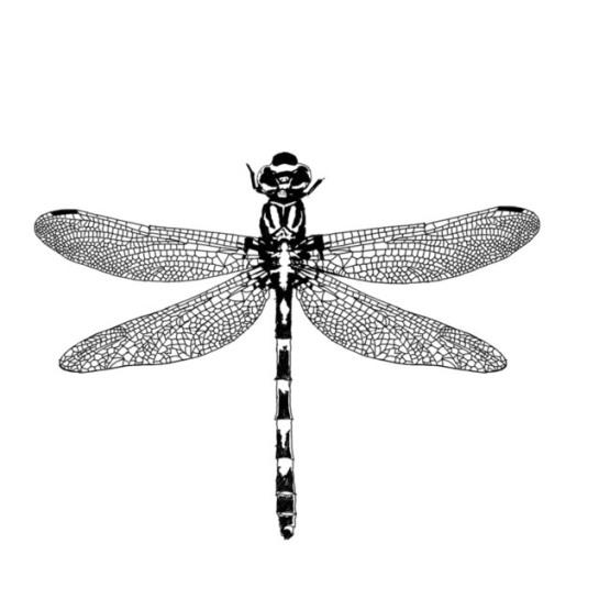 DragonflyTattooFinished