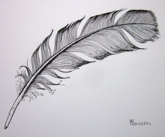 Feather-Drawing-4