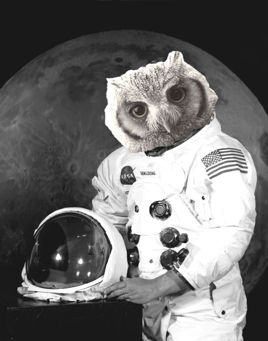 astronot owl