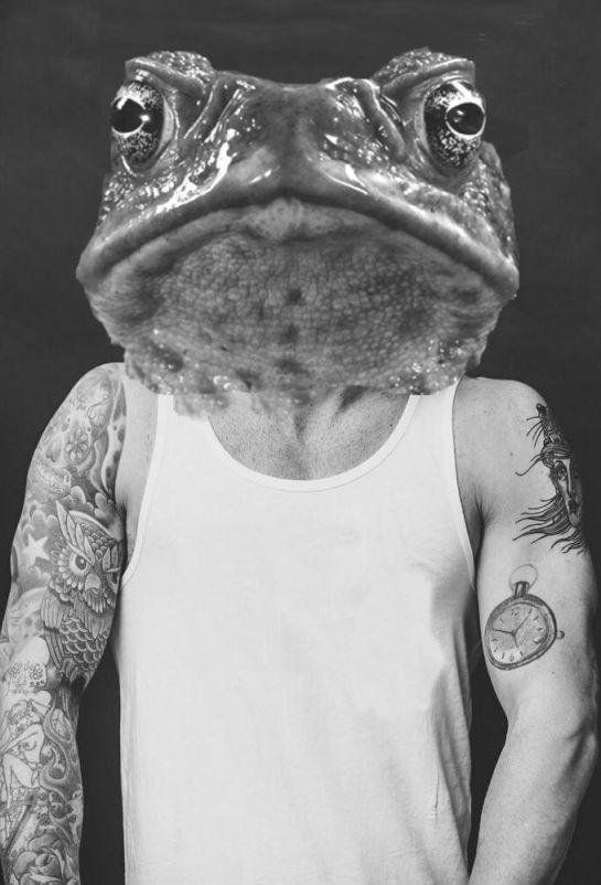 frog hipster