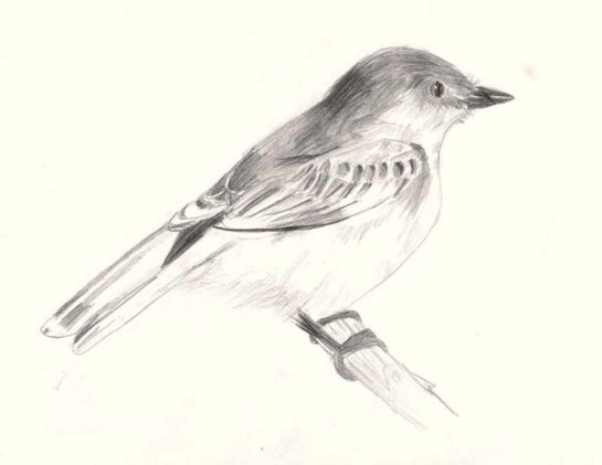 shading_bird01.jpg