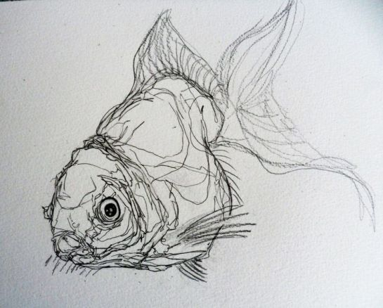 a381bee1d964a05f006216d6aa90fdf2--sweet-drawings-drawings-of-fish