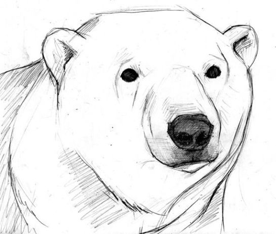 5553ac0bbb67741bc4a3c929d5d73880--polar-bear-drawing-polar-bear-tattoo