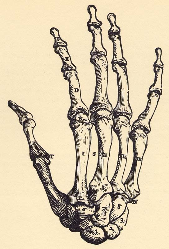 drawn-sleleton-bone-structure-13.jpg