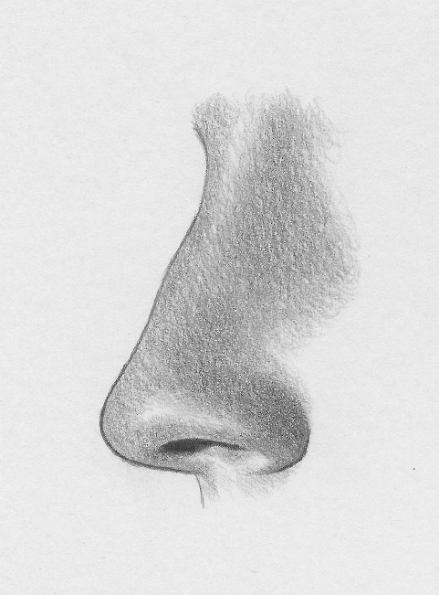 how-to-draw-the-nose-profile-7